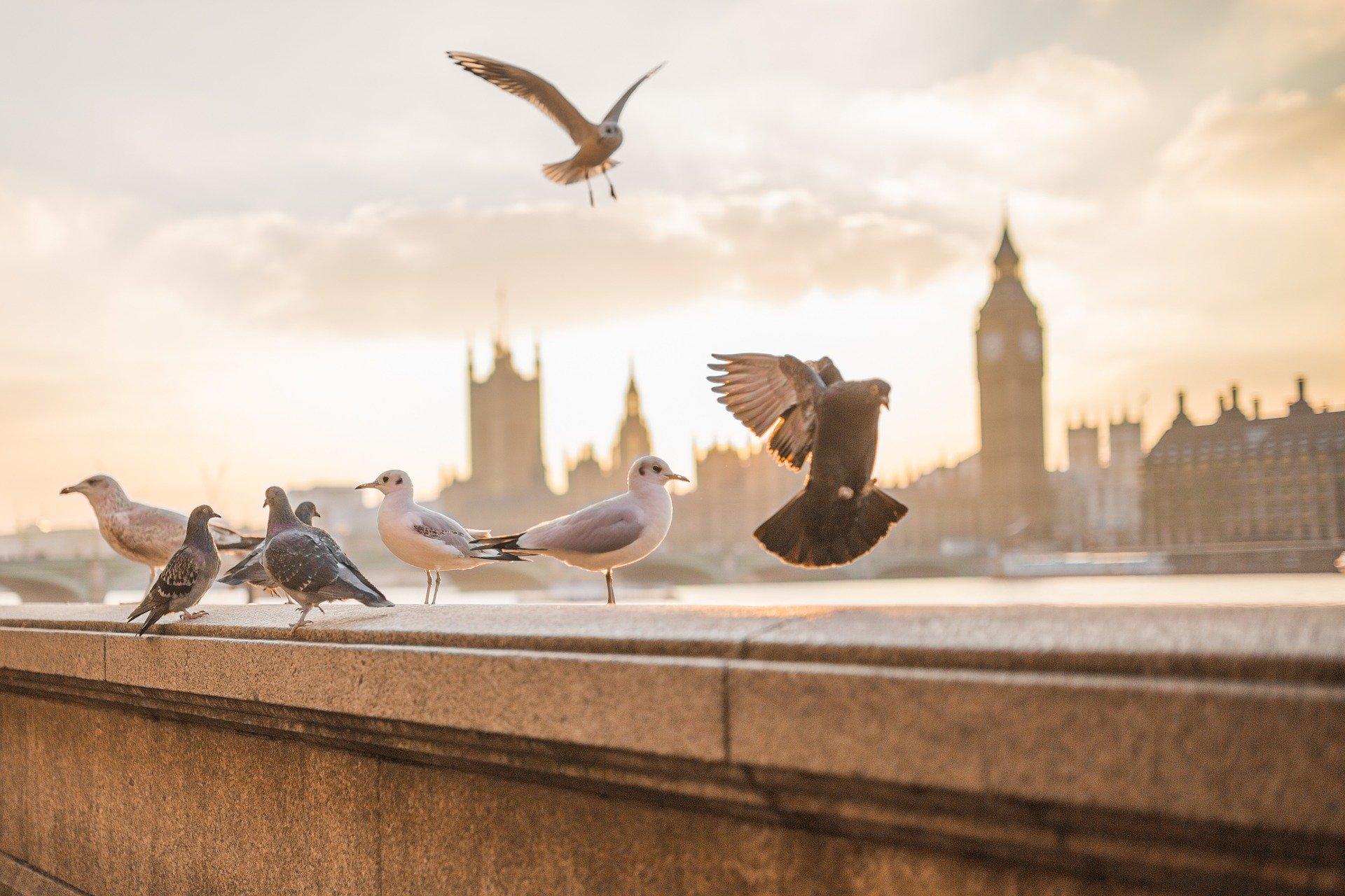 Vögel, Stadt